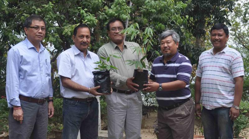 New bamboo species to Dima Hasao