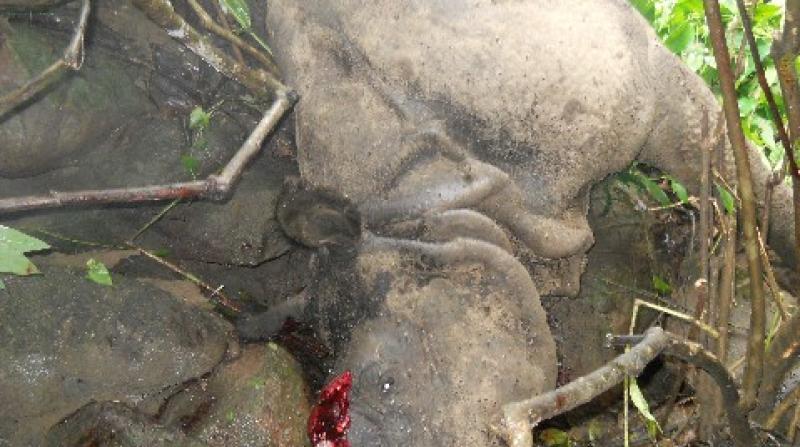 Another rhino poaching in KNP. Photo: Dhrubajyoti Saha, Kaziranga.
