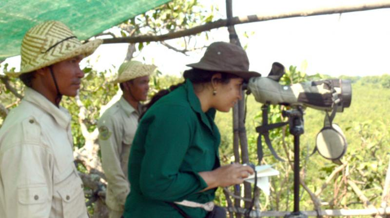 Purnima at work on a tree-top observation centre