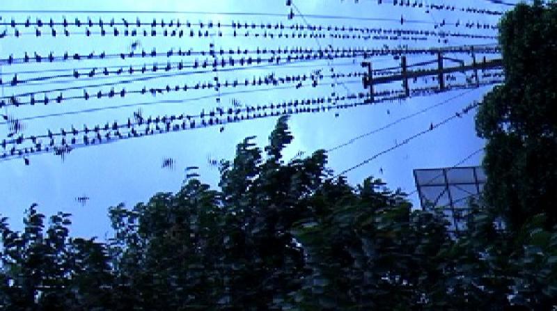Sparrows guwahati
