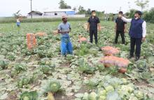 Agriculture Minister Atul Bora visits a cabbage cultivation farmer at Bakarapara in Barpeta on 17-05-2020. Photo by UB Photos