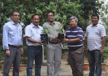 New bamboo species to Dima Hasao