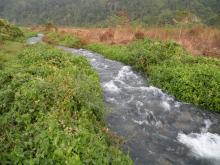Call of wild Udalguri