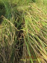 Survey of grassland species in Manas